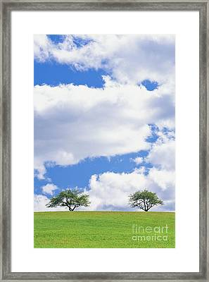 Framed Print featuring the photograph Two Trees by Alan L Graham