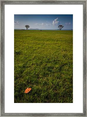Two Trees And A Leaf Framed Print