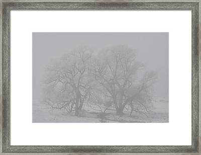 Two Trees Framed Print by BandC  Photography