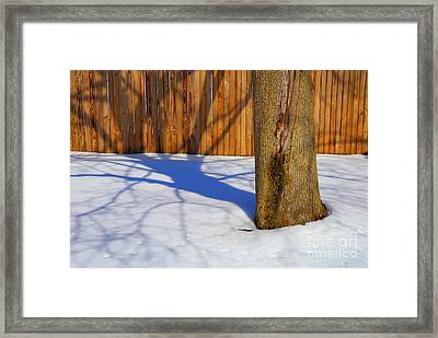 Two Trees In One Framed Print by Paul W Faust -  Impressions of Light