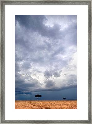 Two Trees On A Landscape, Masai Mara Framed Print