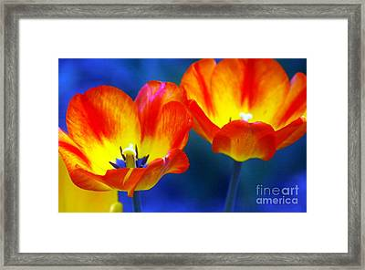 Two Tulips Framed Print by Kathleen Struckle