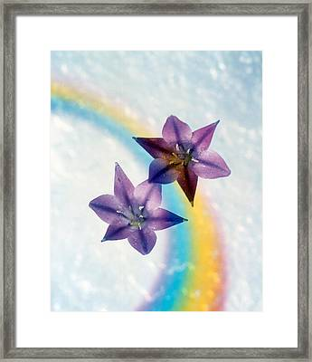 Two Violet Flower On White Blue Framed Print by Panoramic Images