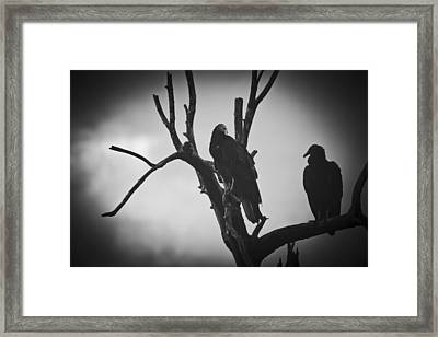 Two Vultures Framed Print by Bradley R Youngberg