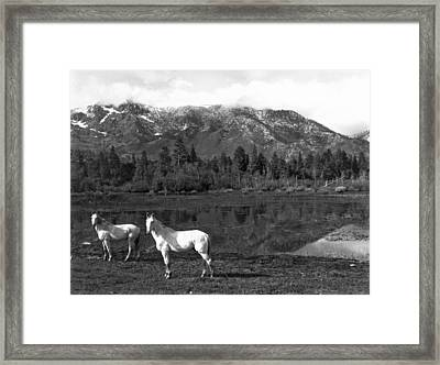 Two White Horses By A Pond Framed Print by Underwood Archives