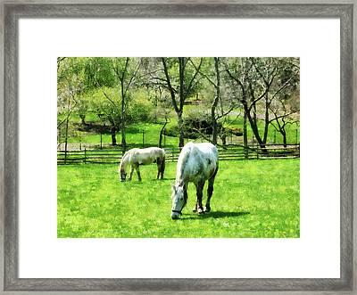 Two White Horses Grazing Framed Print