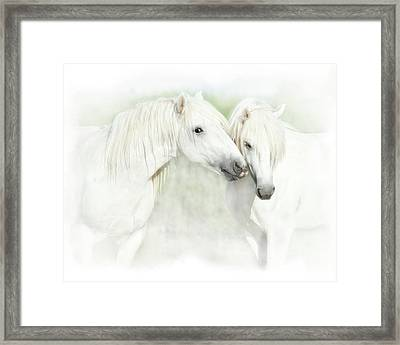 Two White Horses Of Camargue, French Framed Print by Sheila Haddad
