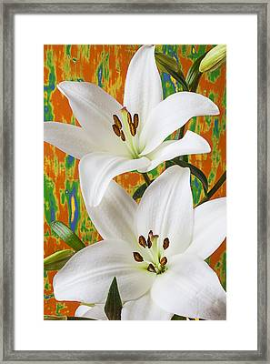 Two White Lilies Framed Print by Garry Gay