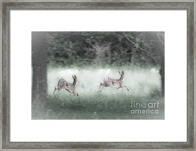 Framed Print featuring the photograph Two Whitetail Fawns Running by Jim Lepard