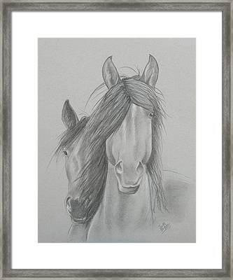 Two Wild Horses Framed Print