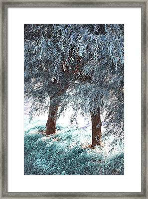 Two Willows Framed Print by Jenny Rainbow