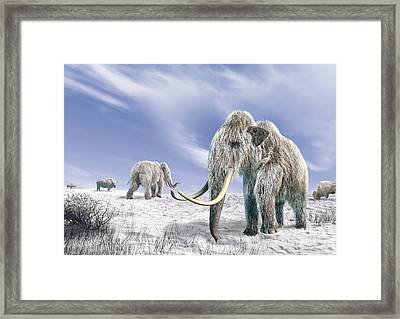 Two Woolly Mammoths In A Snow Covered Framed Print by Leonello Calvetti