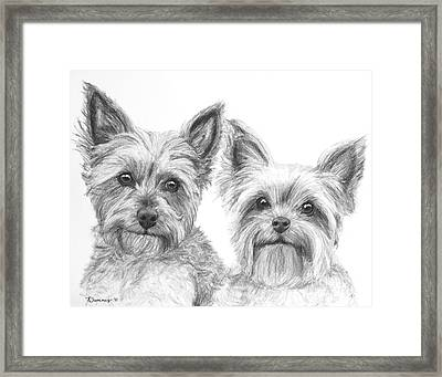 Two Yorkshire Terriers In Charcoal Framed Print