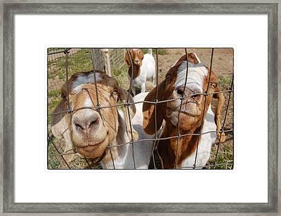 Twogoats Framed Print