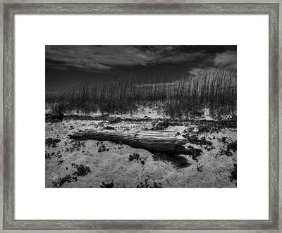 Tybee Island Driftwood 001 Bw Framed Print by Lance Vaughn