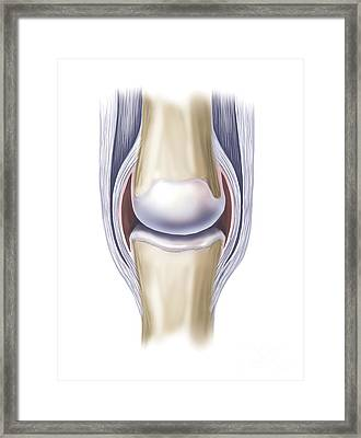 Typical Synovial Joint Framed Print