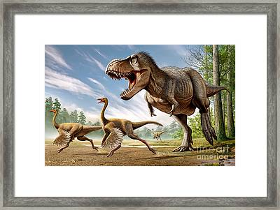Tyrannosaurus Rex Attacking Two Framed Print by Mohamad Haghani