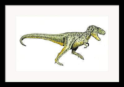 Tyrannosaurus Rex Framed Prints