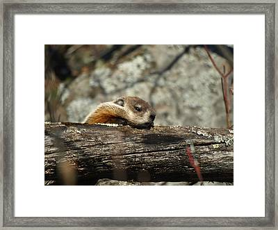 U Can Do It Framed Print by James Peterson
