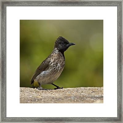 Ubiquitous Bird... Framed Print by Nina Stavlund