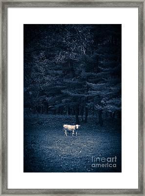 Udder The Moo Night Framed Print by Edward Fielding