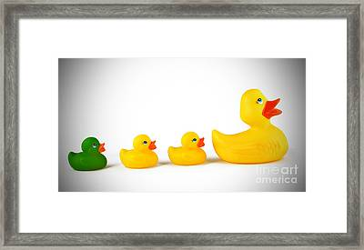 Ugly Duckling Framed Print