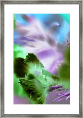 Ugly Duckling Framed Print by Christine Ricker Brandt