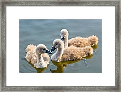 Ugly Ducklings Framed Print by Scott Carruthers
