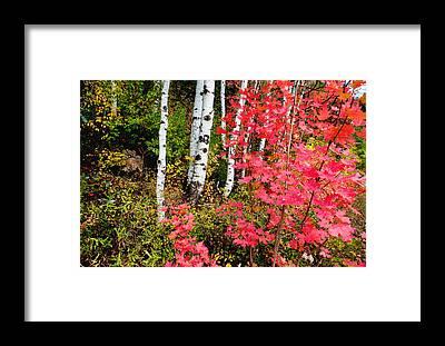 Uinta Framed Prints