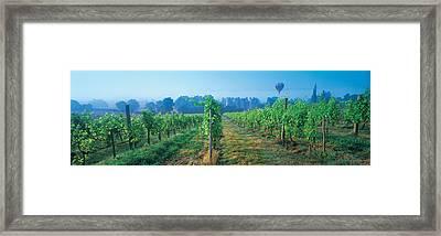 Uk, Great Britain, Sussex, Vineyard Framed Print