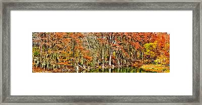 Ultimate Cypress Panoramic Framed Print