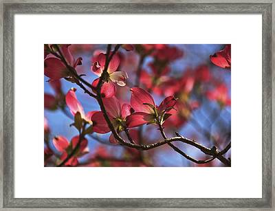 Framed Print featuring the photograph Ultimate Expression by John Harding