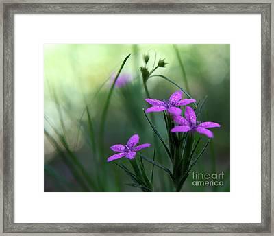 Ultra Violet Framed Print