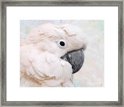 Umbrella Cockatoo Framed Print by Jai Johnson