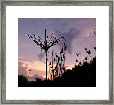 Umbrella In The Wind 2 Framed Print by Elizabeth Sullivan