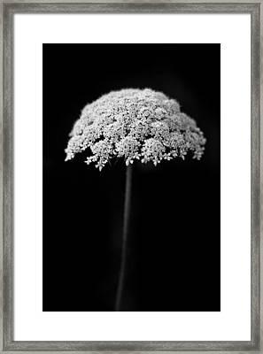 Umbrella Light Framed Print by Shane Holsclaw