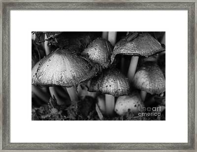 Umbrellas Framed Print by Susan Hernandez