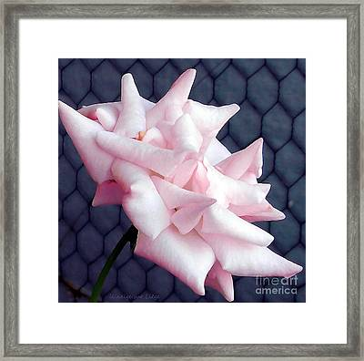 Una Rosa D'autunno Framed Print by Mariana Costa Weldon