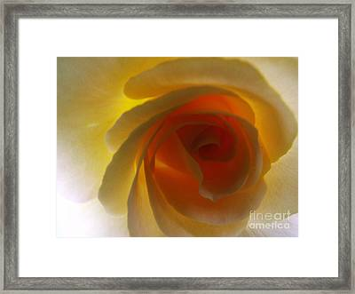 Framed Print featuring the photograph Unaltered Rose by Robyn King
