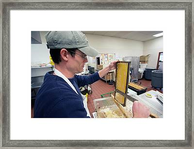 Uncapping Honeycomb Framed Print