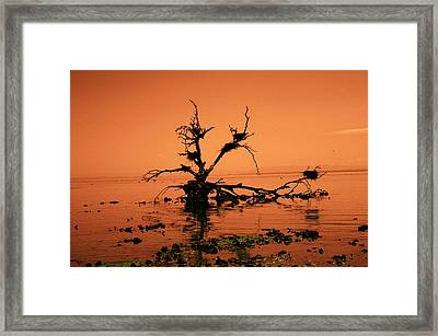 Unchanging Framed Print