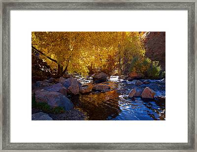 Under A Gold Canopy Framed Print by Jim Garrison