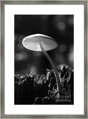 Under A Mushroom Framed Print by Jan Piller