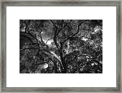 Under A Tree In Black And White Framed Print