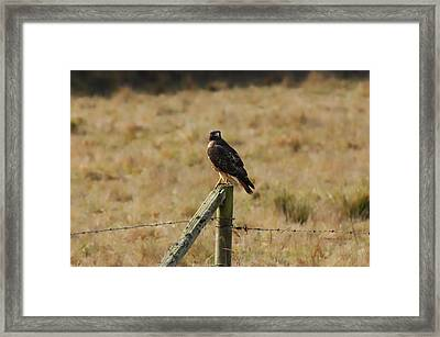 Under A Watchful Eye Framed Print by Donna Blackhall