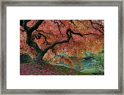 Under Fall's Cover Framed Print