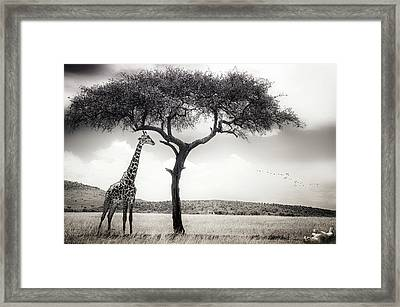 Under The African Sun Framed Print by Piet Flour