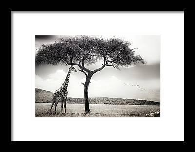 Masai Mara Framed Prints