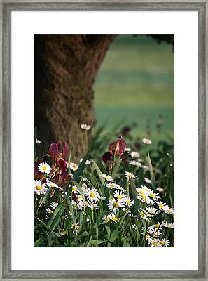 Framed Print featuring the photograph Under The Apple Tree by Penny Hunt