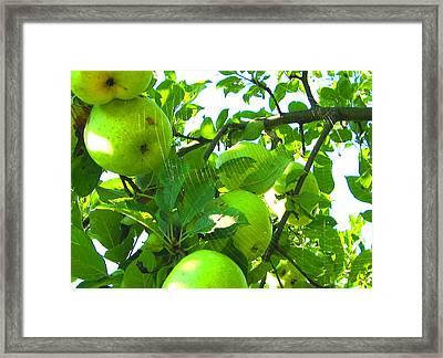 Under The Apple Tree Framed Print